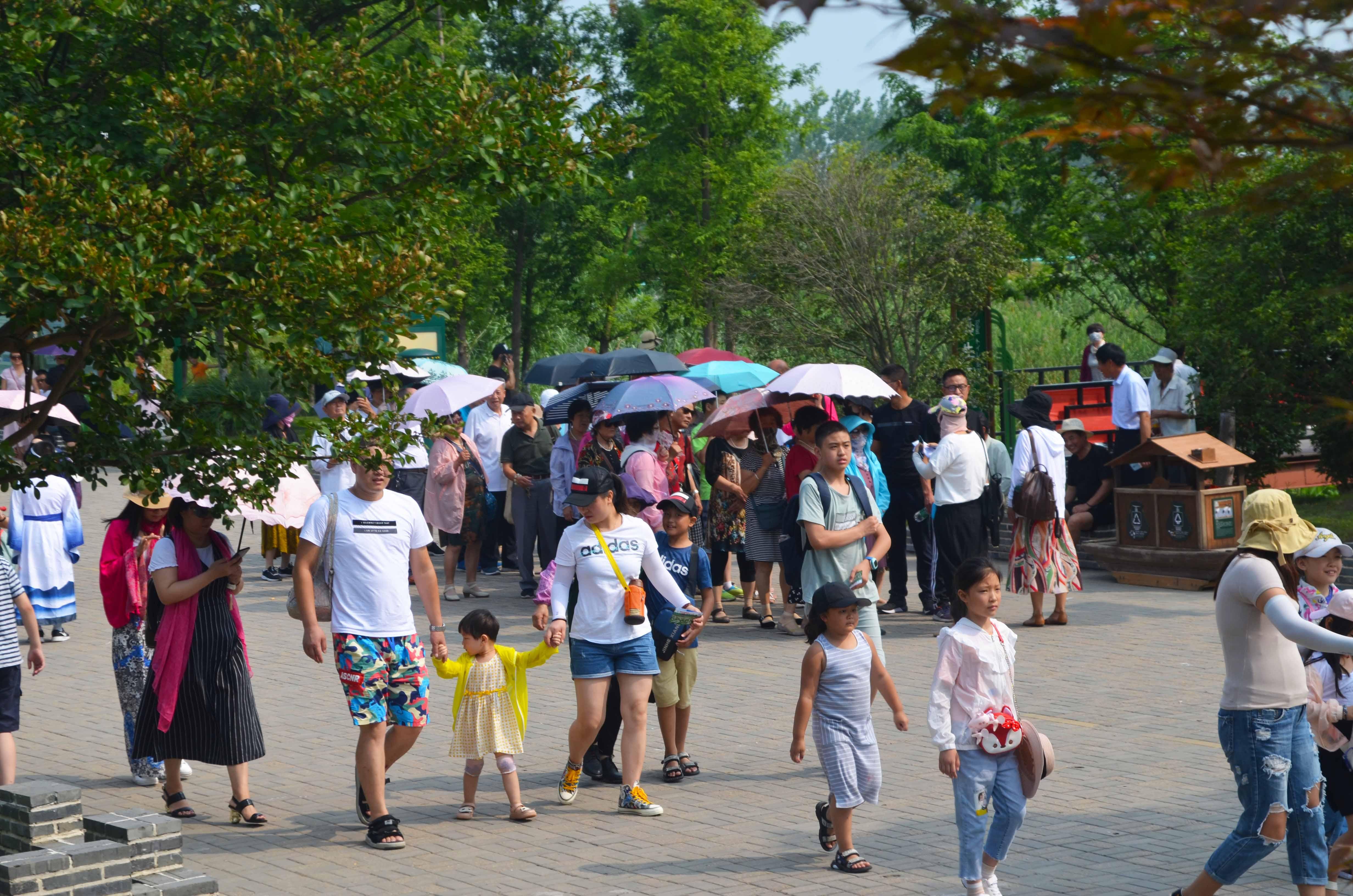 洪泽湖湿地迎来暑期旅游热潮