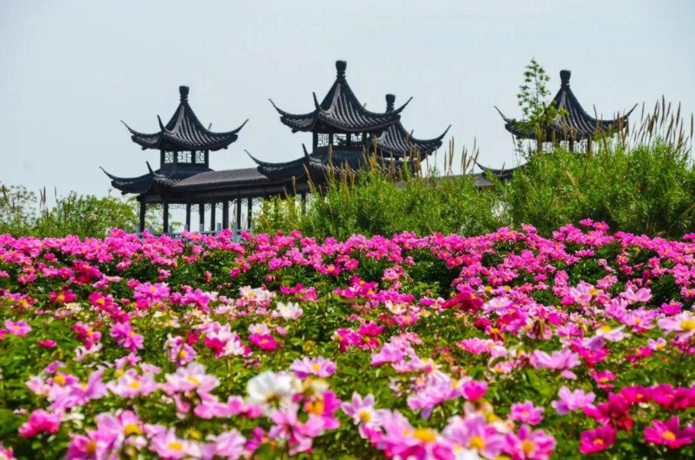 """""""郁""""见春天——洪泽湖湿地清肺赏花游园会活动来袭!"""